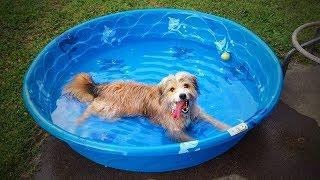 Dogs And Water ???????? Funny Dogs Love To Play Water (Part 1) [TNT Channel]