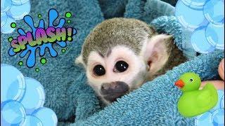 Baby Monkey Bath FUN #MonkeyBooCrew #SquirrelMonkey #Cutpet #Love