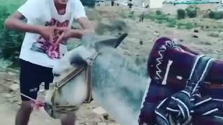Kiki do you love me -Kurdish Version - funny