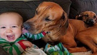 Cute BABY belly laughing at DOG so funny | Dog loves Baby Compilation