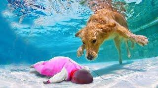 LIVE: Hero dog saves babies out of the water- Dog loves baby