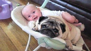 FUNNY PUG DOG AND BABY MORNING PLAY TIME | Dog loves Baby Compilation