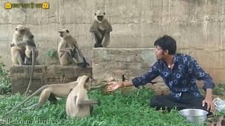One Guy 10 Funny Voices ( INDIAN Actors Like Hrithik,Nana,SRK ) Love Animals - Adarsh