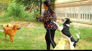 ???????????? Funny Dogs Love And Hug His Owner So Much, Pretty Girl Happy To Playing With Her Dogs