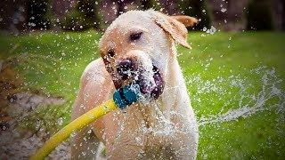 Dogs And Water ???????? Funny Dogs Love To Play Water (Full) [TNT Channel]