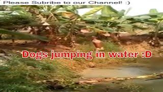 Dogs Enjoying In Water - Funny Dogs On Water Slides | Dogs Love Water Compilation