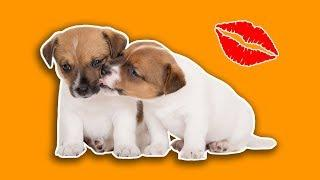 Dogs Playing - Funny Dogs Loving Dogs ???? Try Not To Say Aww!