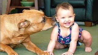 Dog and Baby Giggling with more fun | Dog loves Baby Videos
