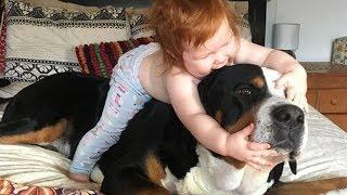 Funny Dog Playing With Baby Compilation - Cute Baby Love Dog Video