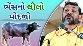 Ghanshyam lakhani | Bhes no Podalo | Jokes | Full Comedy | Gujarati Jokes | New Dayro | 2019