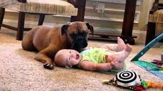 CUTE BABY LAUGHING WITH FUNNY BOXER DOG | Dog loves Baby Compilation