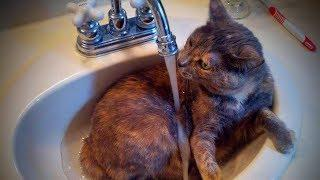 Cats Love Water ???????? Funny Cats Hate Relationship With The Water (Full) [TNT Channel]