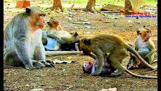 King Wonder Why Small Baby Monkey Open Big Mouth Like This, Fun Monkey Joke Time