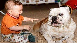 FUNNY DOGS LOVE TO MAKE BABY LAUGH !  Dog loves Baby compilation