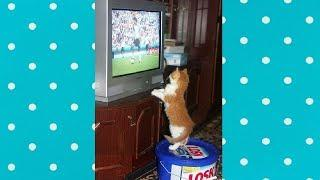 Dogs and cats love watching the World Cup - Funny Everyday Compilation