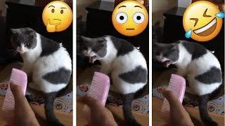 Funny Animals ???????????? Cute Animals, Animal Kingdom, Funniest Videos, Popular Trend Tik Tok Musi