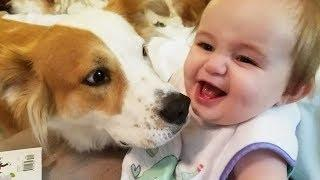 Funny Dog with Baby belly laughing very happy | Dog loves Baby Videos