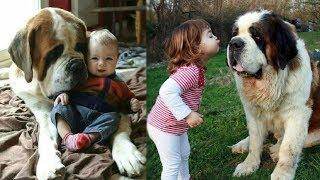 DOG AND BABY WITH LOVE | Saint Bernard and Newfoundland Dog loves Baby Compilation