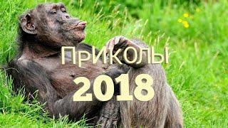 Приколы 2018 | Jokes time | Видео приколы | Time of jokes
