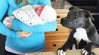 Funny DOG REACTIONS when meeting newborn baby | Dog loves Baby Compilation
