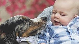 Funniest Dogs Love Sweet Baby Moments - Cute Baby Video