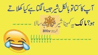 New funniest jokes collection in urdu by ntv 2018|urdu latifay