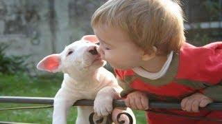 Funny Bull terrier Dog being friendly with Baby | Dog loves Baby Compilation