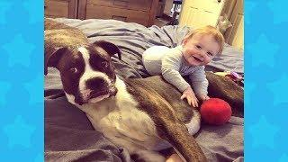 FUNNY BABY AND DOG SHARING FREE TIME TOGETHER | Dog loves Baby Compilation