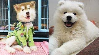 Dog Love Cute And Funny Dog Videos Compilation - A Cute Dog Video