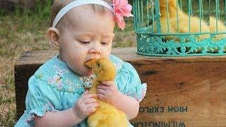 Cute Bird Falling in Love with Baby ???????????? Funny Parrots and Babies Compilation